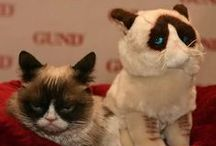 Grumpy Cat / Worst. Board. Ever.   Your destination for GUND's grouchiest plush toys.