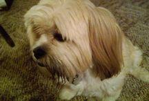 Best Friend / My late doggie Ginger- my best little friend.