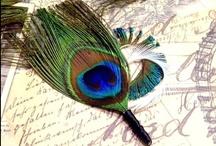 Peacock Theme / by Jen Putnam