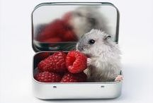 Cute Animals / Cute and funny animals / by Ashley (Peek & Ponder Blog)