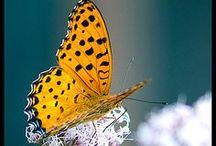 Butterflies & Birds / by Karen Bedson/Westerberg