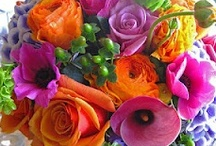 Flowers / a colorful collage of flowers,  growing tips, planter ideas & more / by Cynthia Rogers