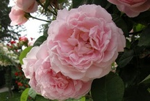 beautiful blooms / by Tina Bucci