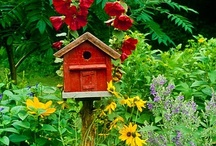 birdhouses & the birds that live there / by Tina Bucci