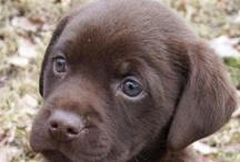 puppy love / by Karen Bedson/Westerberg