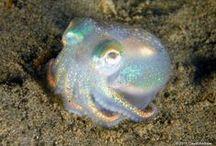 Liana's Mermaid World - Marine Creatures