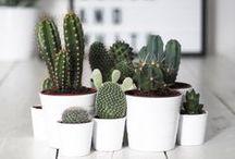 Succulents+Cacti