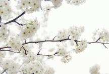 Flowers / by Wendy Adams