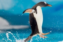Penguins!!!! / by Maria Lillrose