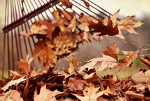 There's Just Something About Fall... / by Michelle Rosenberger