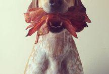 Crazy Dog Lady / by Jen Kroll