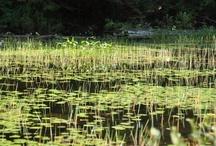 Hardy Lake / Thanks to Marisa S. for photos