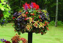 Gardening / by Christy Brockman