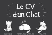 Chat / by Julie Lalinne