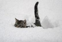 Cute animals / by Cristina Carrillo