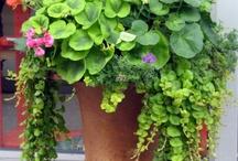 Gardening by the Yard / by Lysa Markey