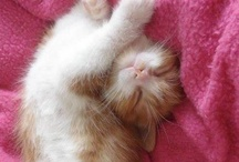 """We are """"S"""" / We are cat, we are yoga cat ,we are """"S"""" all the time !! totally !!"""