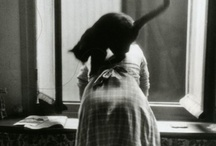 Woman & Cat / In some  universe, woman and cat are the same