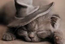 """We are sleepy / Anytime is """"time to bed"""""""