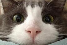 "We are ""!"" / Bazinga Cat !"