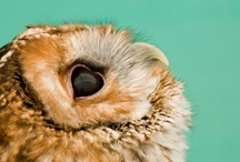 OWLS / Owls / by Lady Mustard