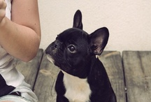 FRENCHIES / by Lisette