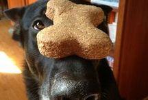 Love my German Shepherd / by Tracy Peck