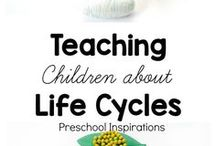 Life Cycle Activities / Life Cycle Theme for preschoolers