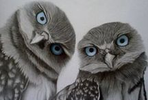 I am fascinated by Owls