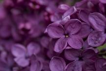Shades of Purple / by Larkin