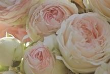 flowers / by G.O.R.G.E.O.U.S