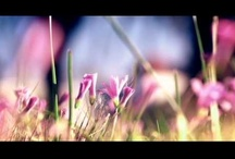 Vídeos / Vídeos de esperança e sobre a Bíblia