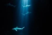 Under the Sea / by Cheryl Cruz