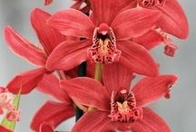 Orchids  / by G.O.R.G.E.O.U.S