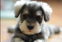 just darn cute! / by Heather K