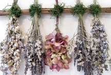 Ideas for dried flowers & herbs