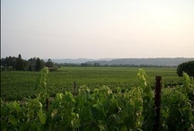 OUR SONOMA TRIP / going to Sonoma in May and these are the places we plan to visit! / by Freshmom: Good Taste Guide