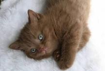 Cats...Here Kitty Kitty / by Jennifer Winkler