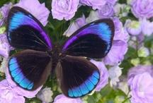 Butterflies / by Diana Presley