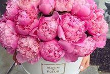 Floral Favorites / Flowers, Floral, Flower Arrangements, Vases, Floral Art, Home Inspiration, Planting, Accents, Home Decor, Design, Roses, Hydrangeas, Tulips, Peonies