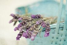 Love Of Lavender