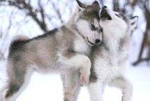 Puppy Love :D / Pictures of adorable puppies!! :D