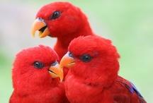 birds... / aves... / by MariaFatima El-Khatib Borges Gomide