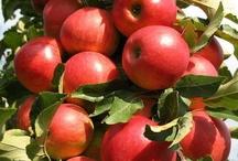 fruits of the earth... / frutos da terra... / by MariaFatima El-Khatib Borges Gomide