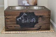 Hudson  / Golden Retriever