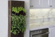 Plantas e folhagens interior da casa - Indoor Plants and  Tulips