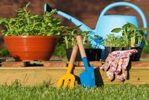 Home and Garden / Find out how to start a garden, when the best time to plant in a garden is and more. Redecorating your home, remodeling, cleaning tips and more home related articles.