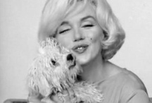Celebrity Dogs / All about Celebrities.... And their dogs! Go to dogingtonpost.com to read all about your favorite celebrity!