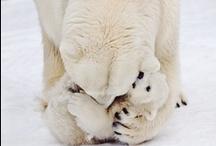 x  Polar  - inverno - neve