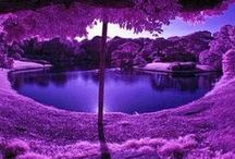 Purple Passion / For me, the only color in the world is purple. If I had my way every good thing in the world would be purple. / by Joan Haley